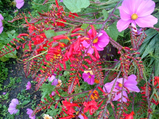 flowers in the kitchen garden 2015 006
